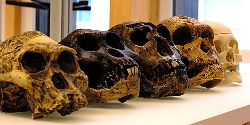 antropologia genetica