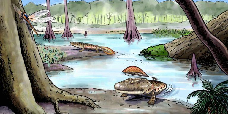 Evolución - Tierra primitiva
