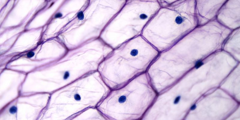 quimica bioquimica celula microscopio
