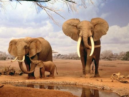 (El hábitat natural de los elefantes.)