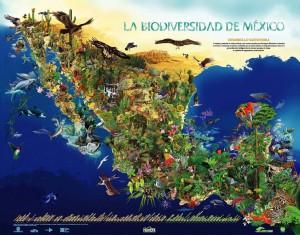 (Qué es la biodiversidad. Especies en México.)