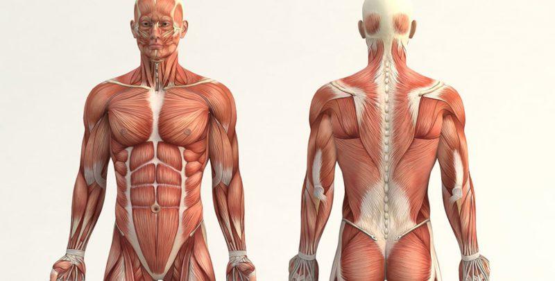 Qué es Anatomía?