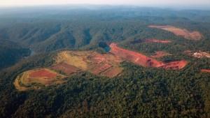 (Deforestación indiscriminada.)