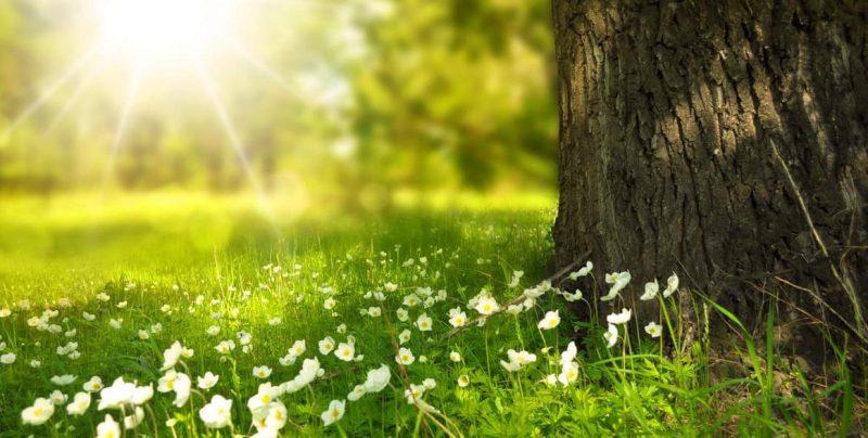 naturaleza - medio ambiente