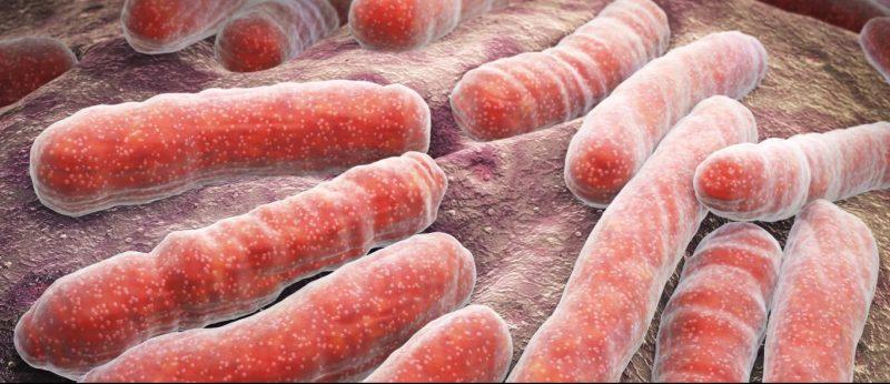 tuberculosis - bacteria