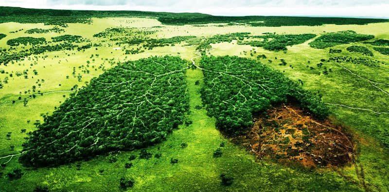 movimiento ecologista