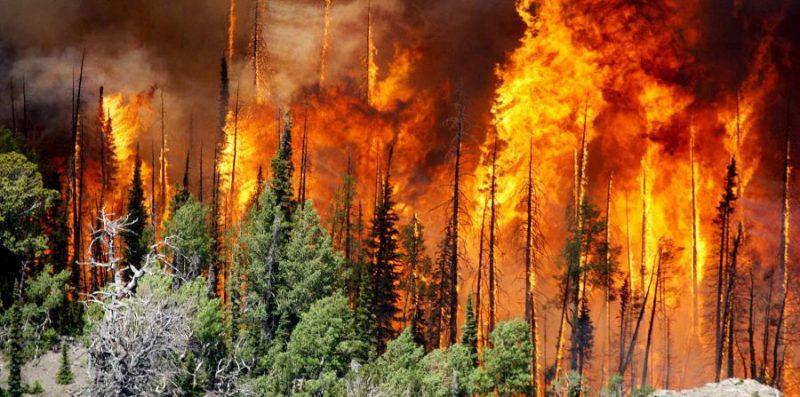 desastres naturales - incendios forestales