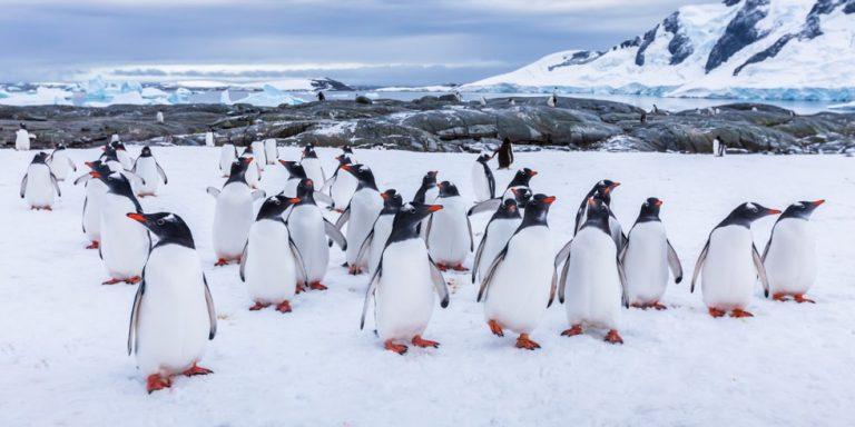 ecosistema ejemplo polar