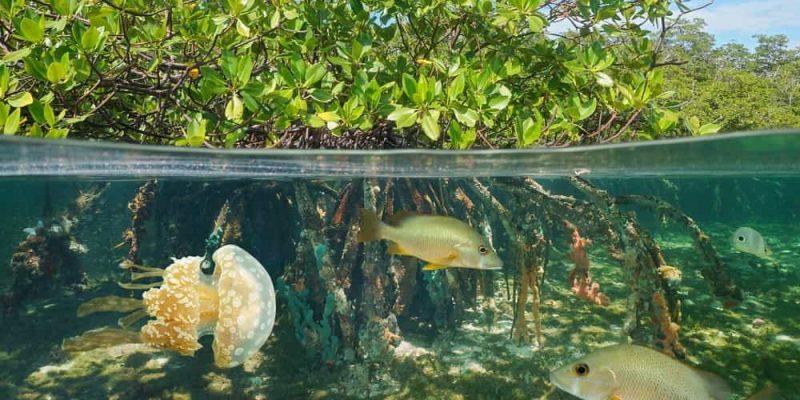 ecosistema tipos mixto