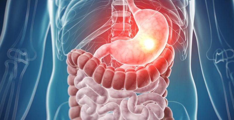 Qué es Sistema digestivo? - Concepto, Definición y Características