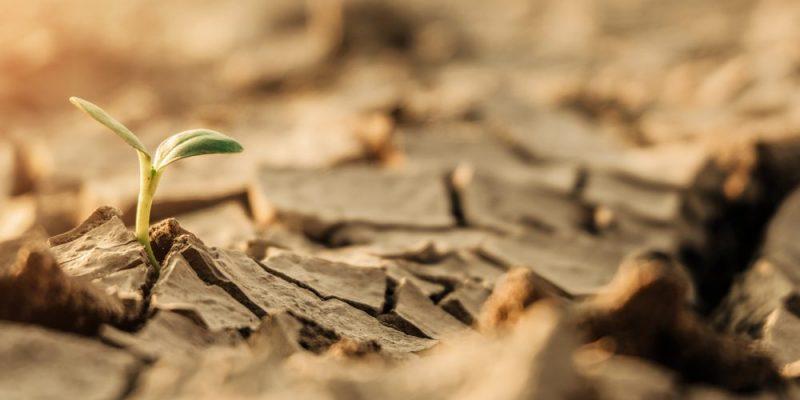Suelo - Fertilidad del suelo
