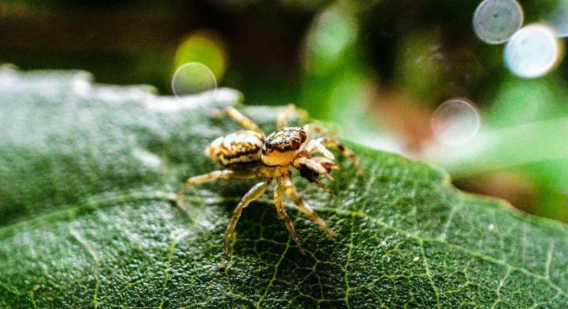 aracnidos - invertebrados