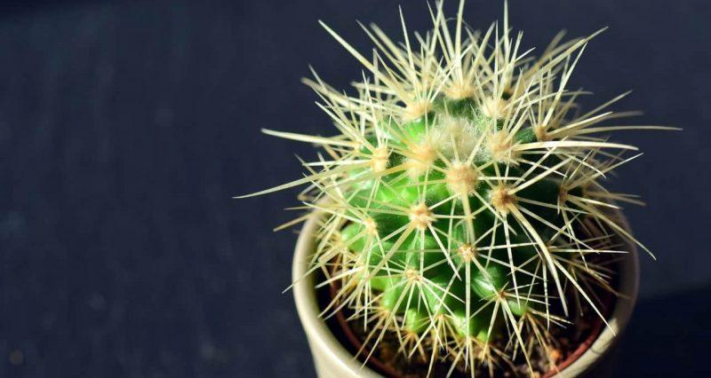 plantas - autotrofos