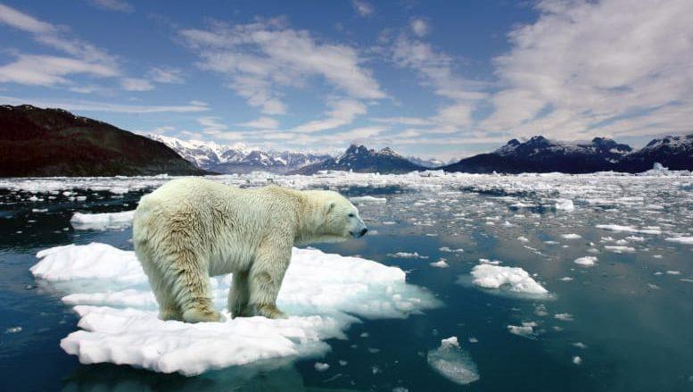calentamiento global - polos