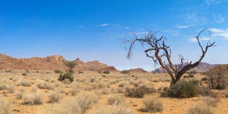 desierto - bioma