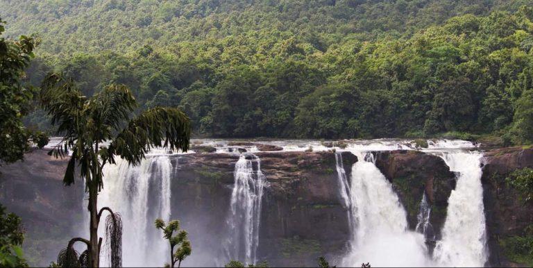selva - biomas