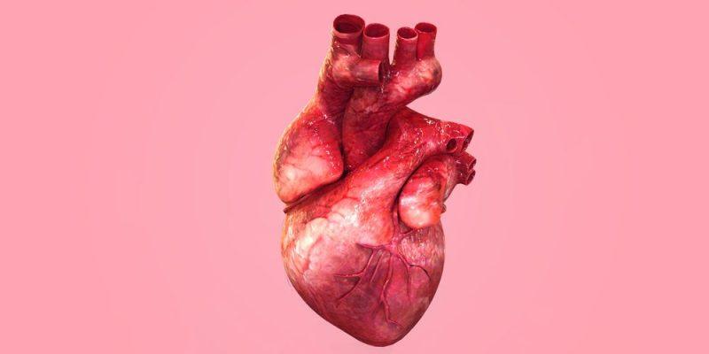 Circuito Circulatorio : Aparato circulatorio concepto función y estructura