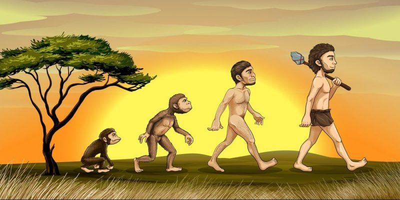 Resultado de imagen para evolución del hombre imagenes