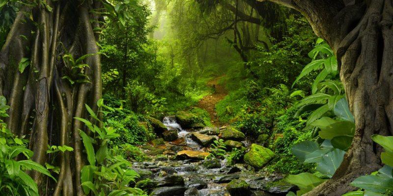 Selva Vegetación