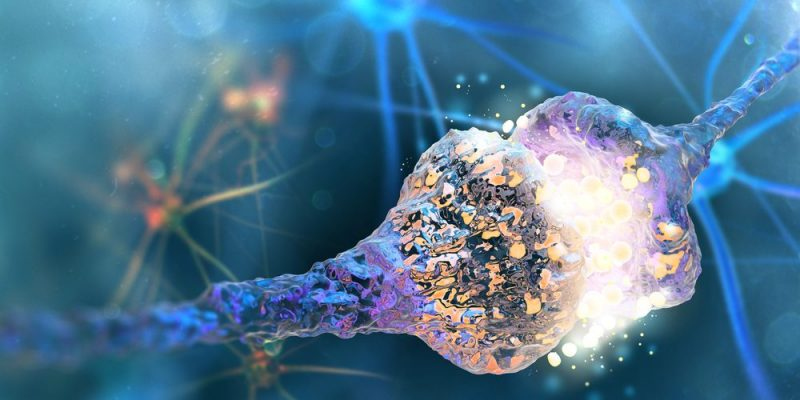 """Resultado de imagen de sinapsis"""""""