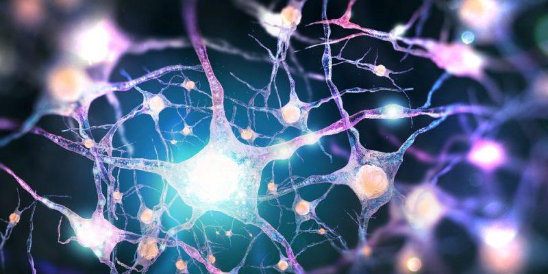 Sinapsis - Concepto, tipos de sinapsis y enfermedades