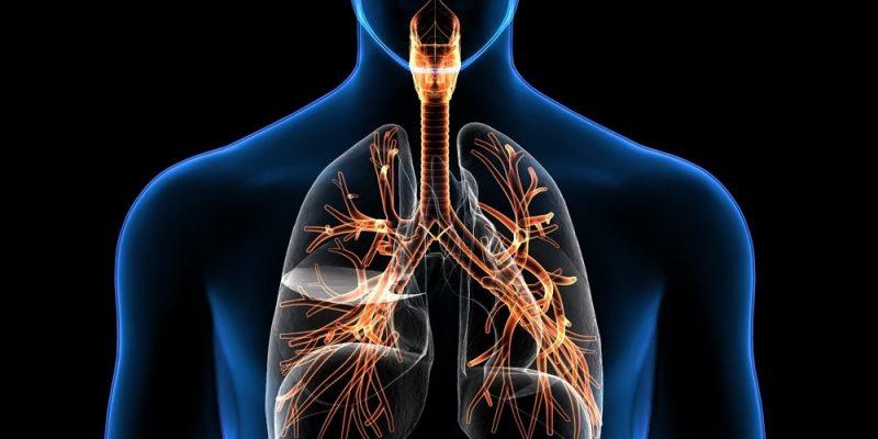 Aparato Respiratorio Concepto Funciones Y órganos