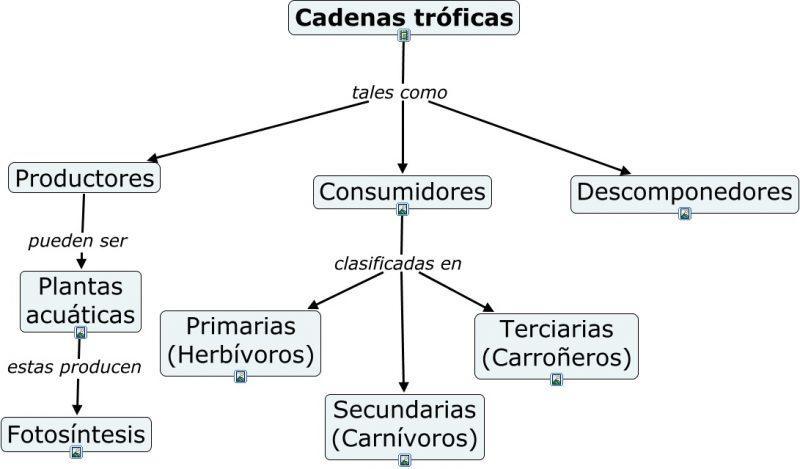 Ejemplos De Mapa Conceptual.Mapa Conceptual Concepto Como Hacer Uno Y Ejemplos