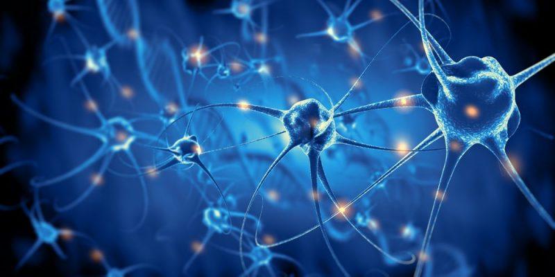 Resultado de imagen para neurona