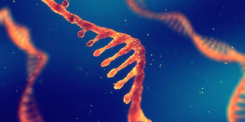 ARN: Concepto, Estructura, Funciones Y Diferencia Con ADN