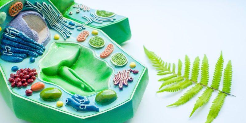 Célula Vegetal Concepto Tipos Partes Y Funciones