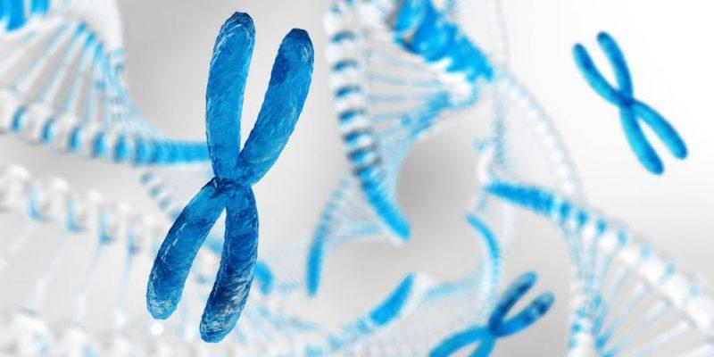 Cromosomas Concepto Estructura Tipos Y Funciones