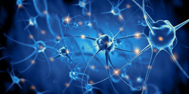 Neurona - Sistema nervioso central