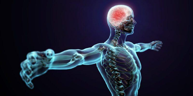 Cual es la funcion principal del sistema nervioso central