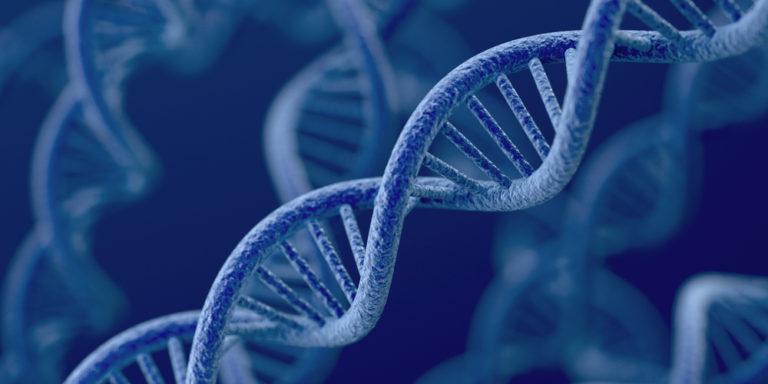 ADN- Herencia - genes