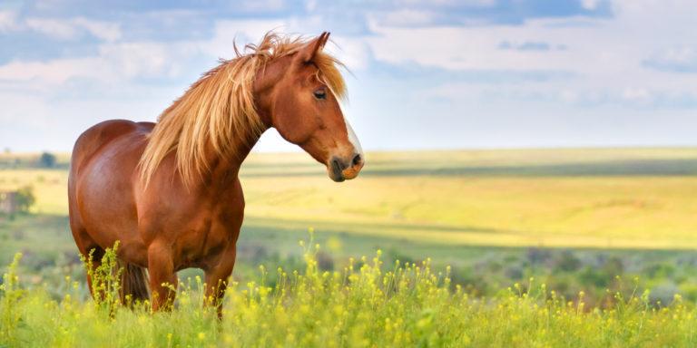 Especies - caballo