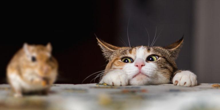 Relaciones interespecíficas - gato y ratón