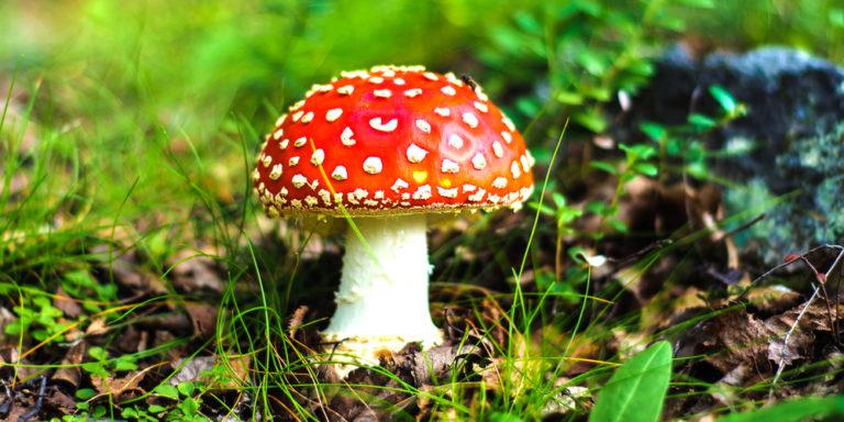 Reino Fungi - hongo