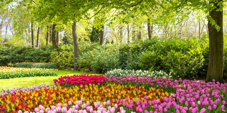 Reino Plantae - plantas - biología