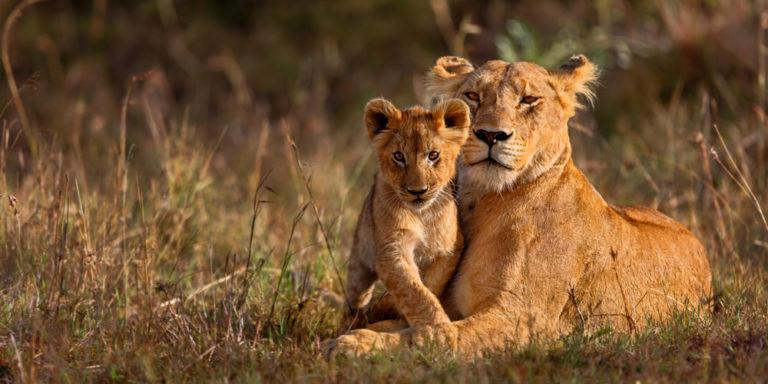 Mamíferos - leona y cachorro