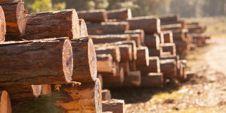 Materia orgánica - madera