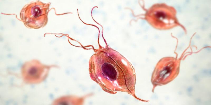 tipos de parasitos protozoarios