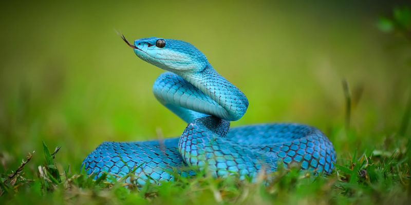 Reptiles: Concepto, Tipos, Reproducción y Características