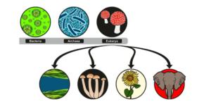 Célula Procariota Concepto Clasificación Partes Y Función