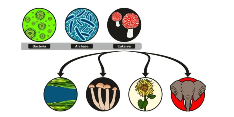 biologico significado para niños