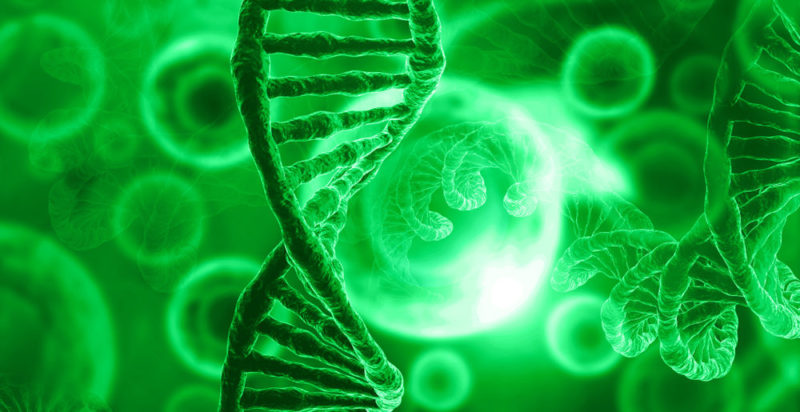 ADN - fenotipo - genotipo