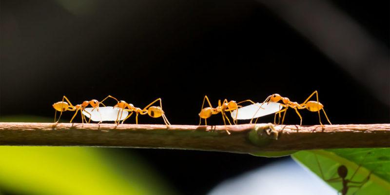 Comunidad biológica