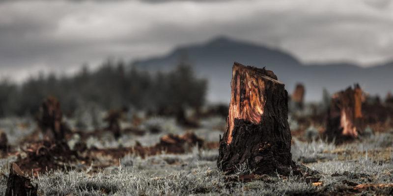 Deforestación - erosión del suelo