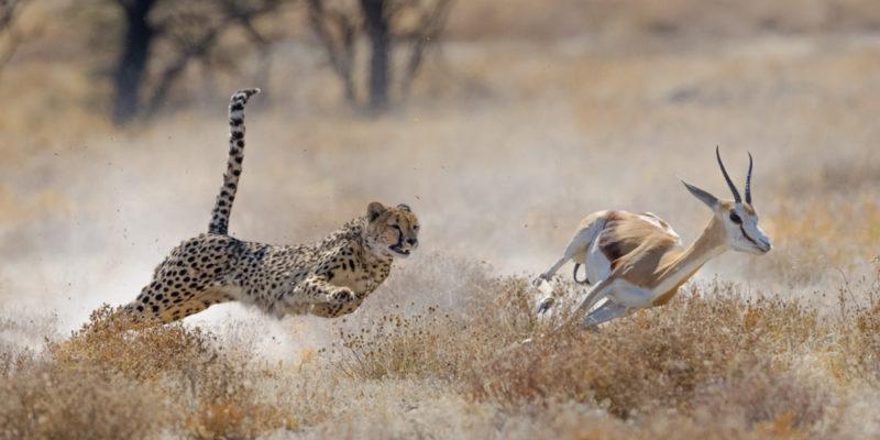 Depredación - comensalismo