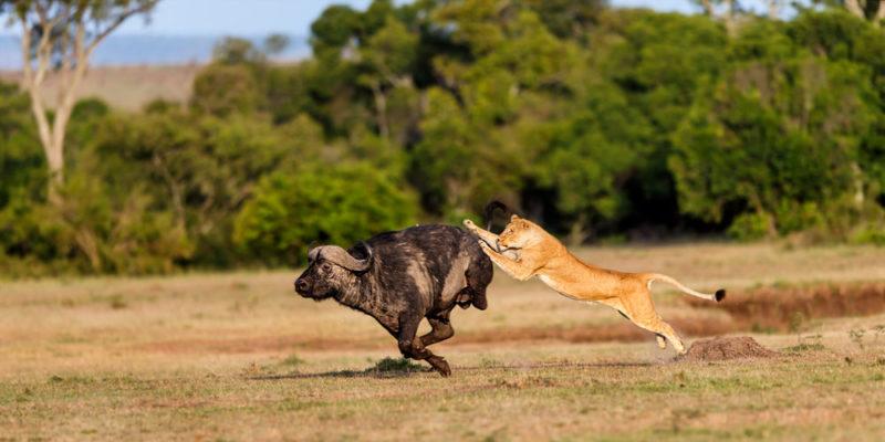 ejemplo de depredador en biologia