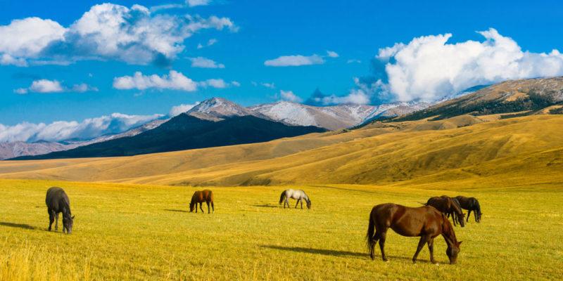Estepa - fauna - caballo